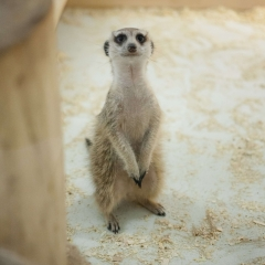 Фото зоопарк